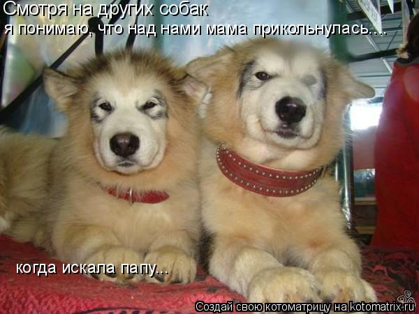 Котоматрица: Смотря на других собак я понимаю, что над нами мама прикольнулась.... когда искала папу...