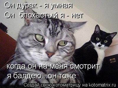 Котоматрица: Он дурак - я умная Он  блохастый я - нет  когда он на меня смотрит  я балдею...он тоже