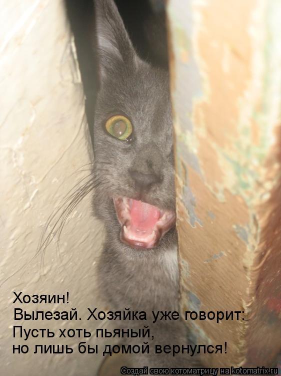 Котоматрица: Хозяин! Вылезай. Хозяйка уже говорит: Пусть хоть пьяный,  но лишь бы домой вернулся!
