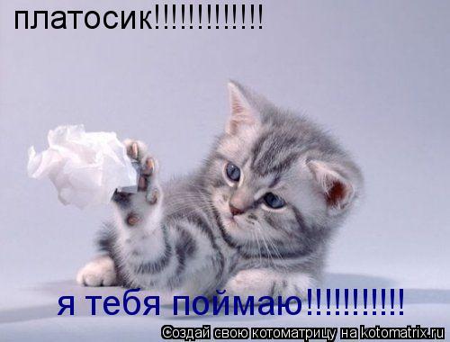 Котоматрица: платосик!!!!!!!!!!!!! я тебя поймаю!!!!!!!!!!!