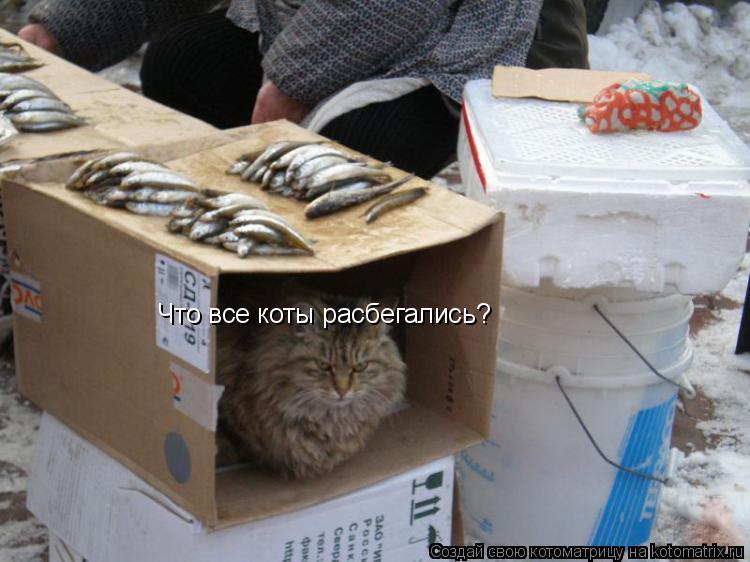 Котоматрица: Что все коты расбегались?
