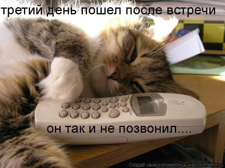 Котоматрица: он так и не позвонил.... третий день пошел после встречи