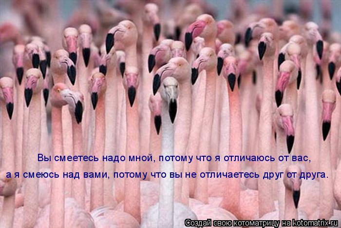 Котоматрица: Вы смеетесь надо мной, потому что я отличаюсь от вас, а я смеюсь над вами, потому что вы не отличаетесь друг от друга.