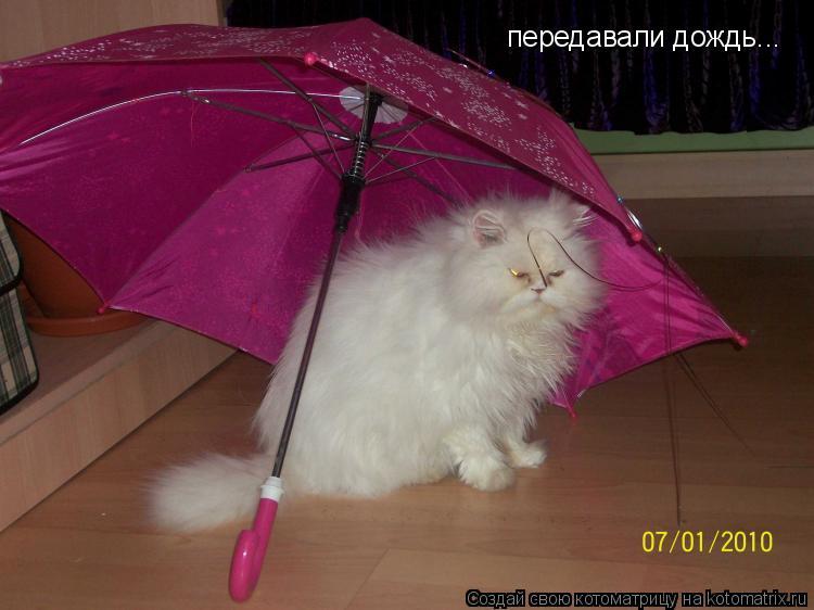 Котоматрица: передавали дождь...