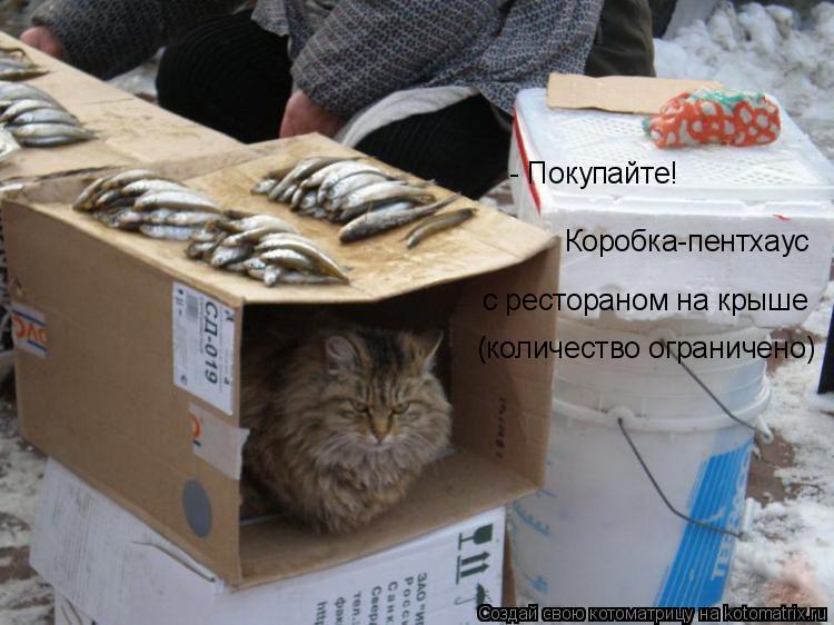 Котоматрица: - Покупайте! Коробка-пентхаус с рестораном на крыше (количество ограничено)