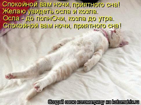 Котоматрица: Спокойной вам ночи, приятного сна! Желаю увидеть осла и козла. Осла - до полнОчи, козла до утра. Спокойной вам ночи, приятного сна!