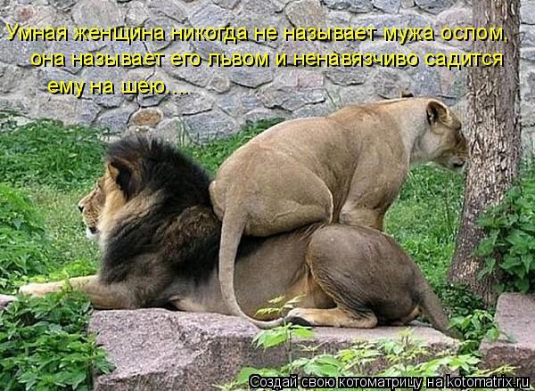 Котоматрица: Умная женщина никогда не называет мужа ослом, она называет его львом и ненавязчиво садится  ему на шею....