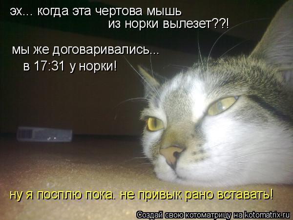 Котоматрица: эх... когда эта чертова мышь из норки вылезет??! мы же договаривались... в 17:31 у норки! ну я посплю пока. не привык рано вставать!
