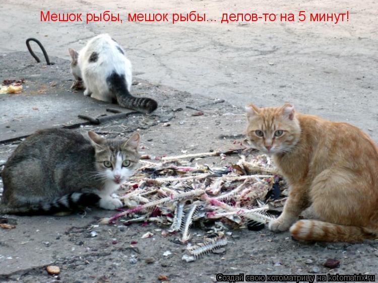 Котоматрица: Мешок рыбы, мешок рыбы... делов-то на 5 минут!