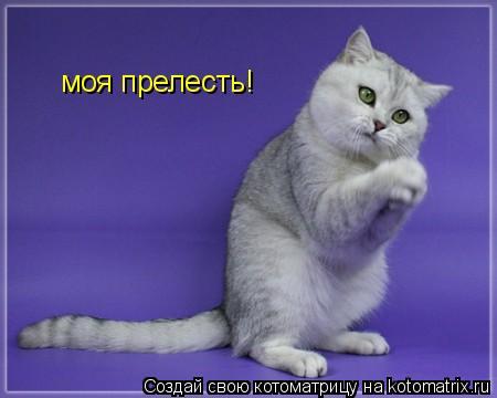 Котоматрица: моя прелесть!