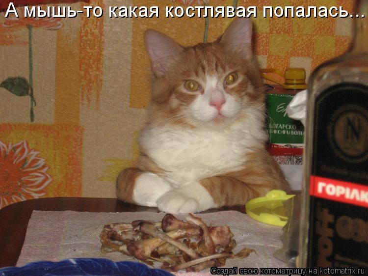 Котоматрица: А мышь-то какая костлявая попалась...