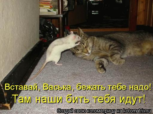 Котоматрица: Вставай, Васька, бежать тебе надо!  Там наши бить тебя идут!