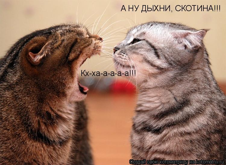 Котоматрица: А НУ ДЫХНИ, СКОТИНА!!! Кх-ха-а-а-а-а!!!