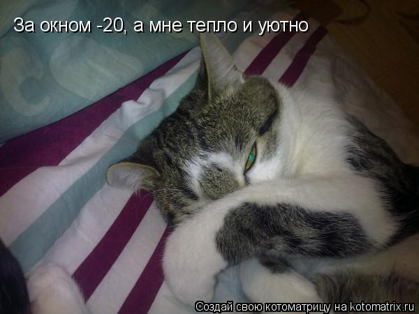 Котоматрица: За окном -20, а мне тепло и уютно