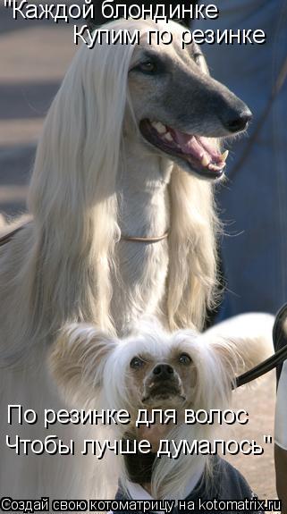 """Котоматрица: """"Каждой блондинке  Купим по резинке По резинке для волос Чтобы лучше думалось"""""""