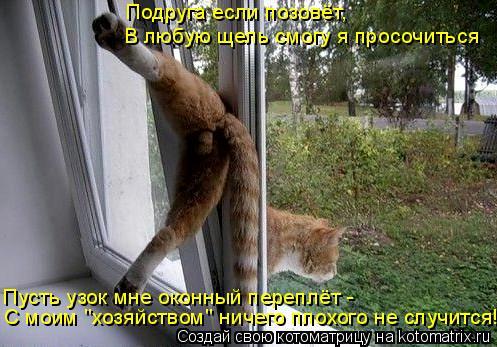 """Котоматрица: Подруга если позовёт, В любую щель смогу я просочиться Пусть узок мне оконный переплёт -  С моим """"хозяйством"""" ничего плохого не случится!"""