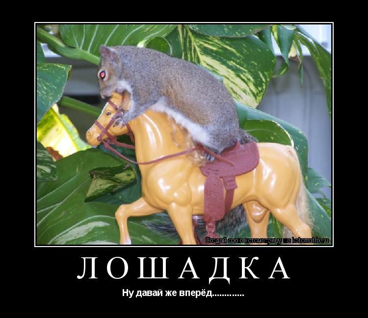 Котоматрица: Лошадка Ну давай же вперёд.............
