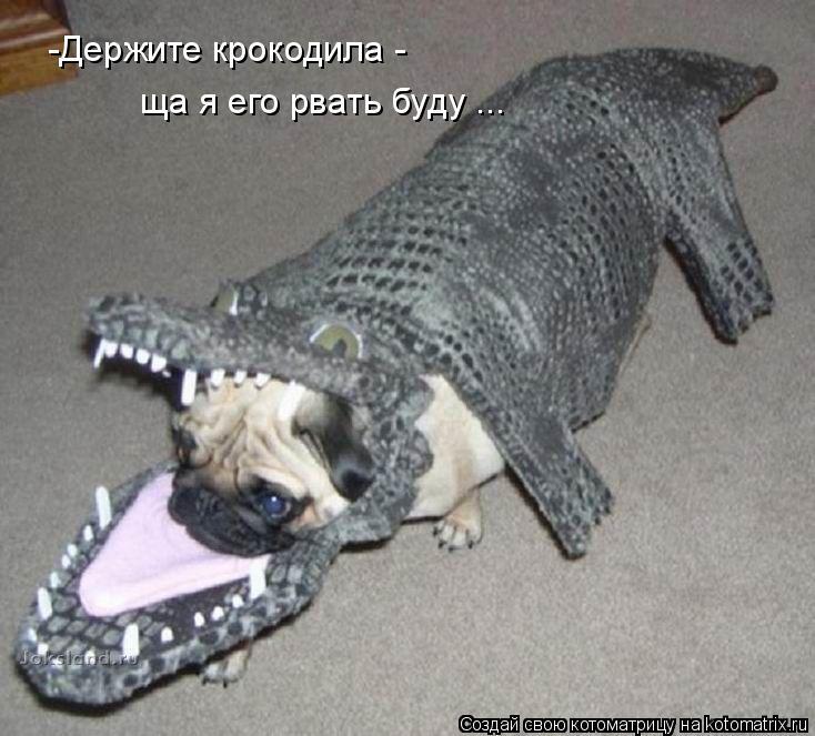 Котоматрица: -Держите крокодила -  ща я его рвать буду ...