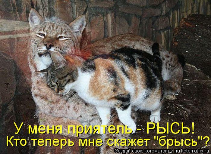 "Котоматрица: У меня приятель - РЫСЬ!  Кто теперь мне скажет ""брысь""?"