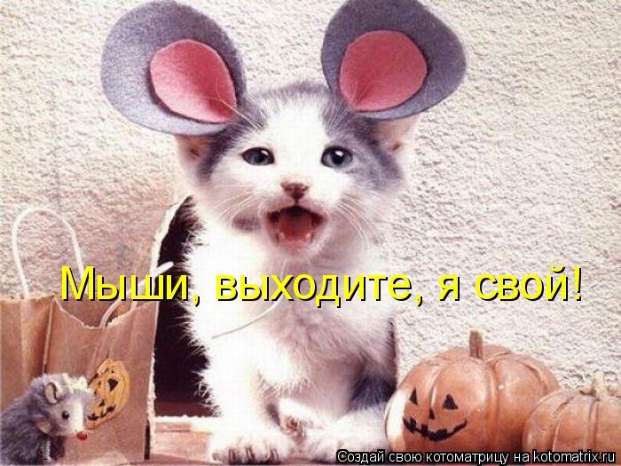 Котоматрица: Мыши, выходите, я свой!