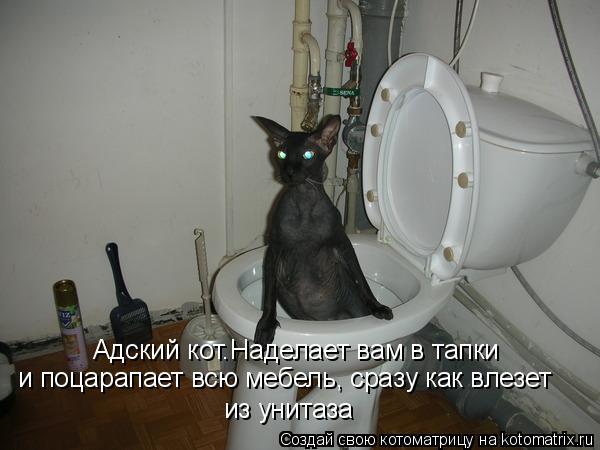 Котоматрица: Адский кот.Наделает вам в тапки  и поцарапает всю мебель, сразу как влезет из унитаза
