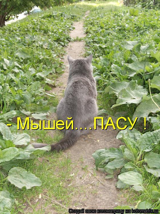 Котоматрица: - Мышей....ПАСУ !