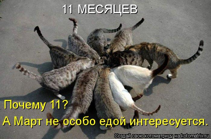 Котоматрица: 11 МЕСЯЦЕВ Почему 11? А Март не особо едой интересуется.