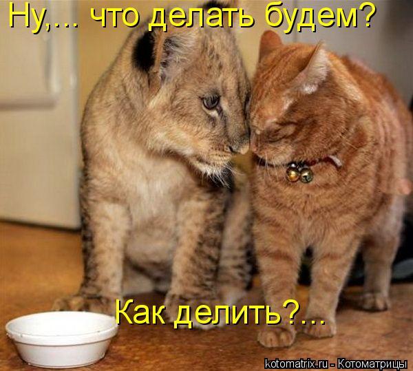 Котоматрица: Ну,... что делать будем?  Как делить?...