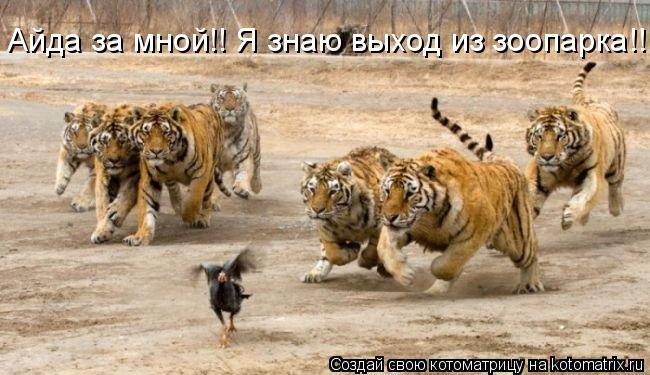 Котоматрица: Айда за мной!! Я знаю выход из зоопарка!!