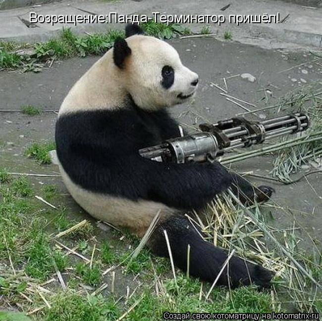 Котоматрица: Возращение:Панда-Терминатор пришёл!
