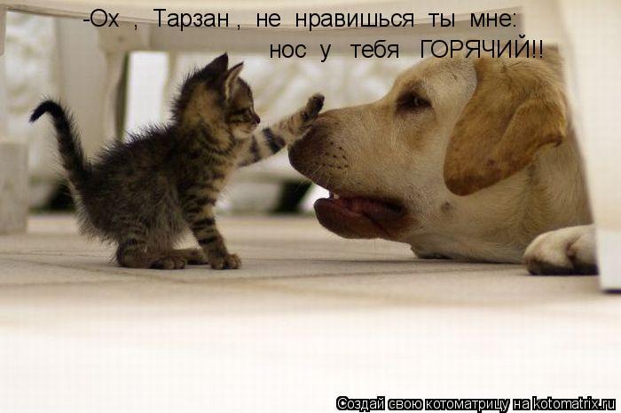 Котоматрица: -Ох  ,  Тарзан ,  не  нравишься  ты  мне: нос  у   тебя   ГОРЯЧИЙ!!