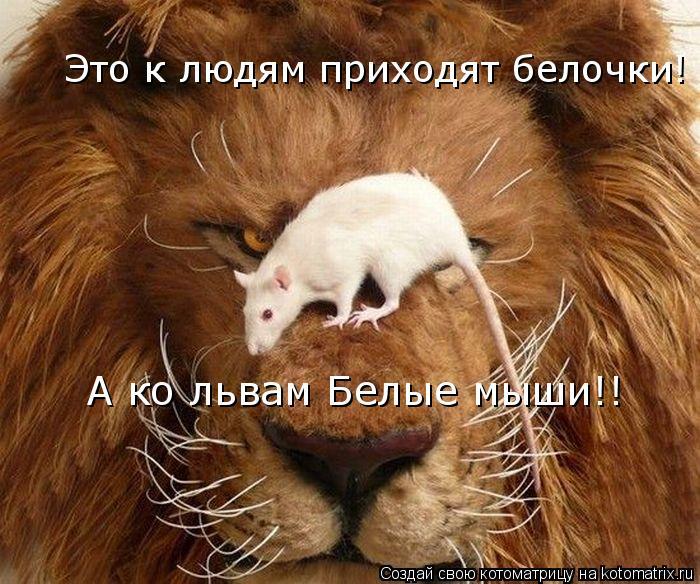 Котоматрица: Это к людям приходят белочки! А ко львам Белые мыши!!