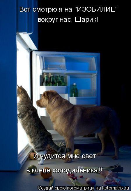 """Котоматрица: вокруг нас, Шарик! Вот смотрю я на """"ИЗОБИЛИЕ""""  И чудится мне свет  в конце холодильника!!"""