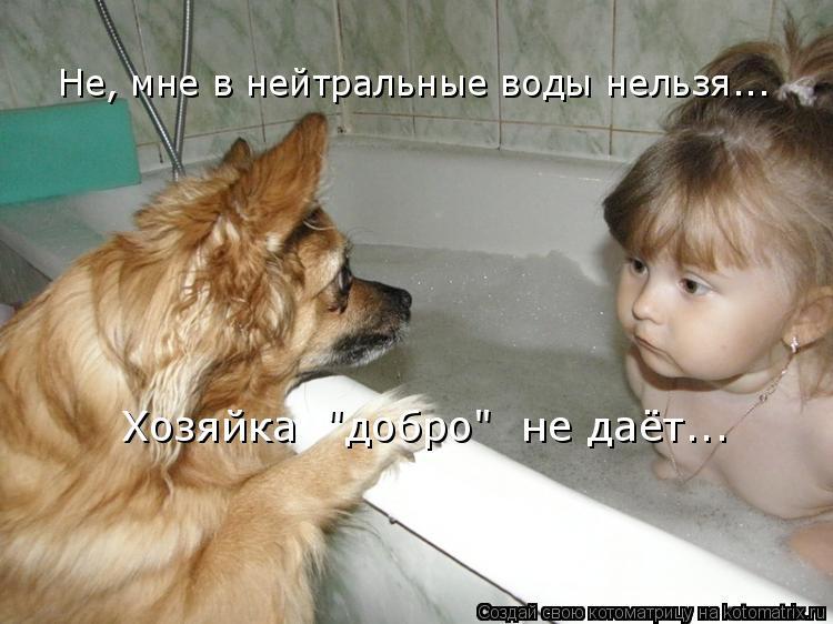 """Котоматрица: Не, мне в нейтральные воды нельзя... Хозяйка  """"добро""""  не даёт..."""