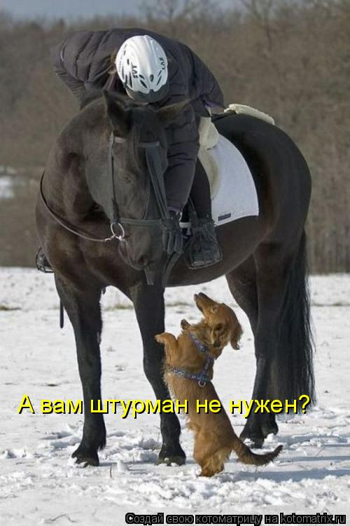 Котоматрица: А вам штурман не нужен?