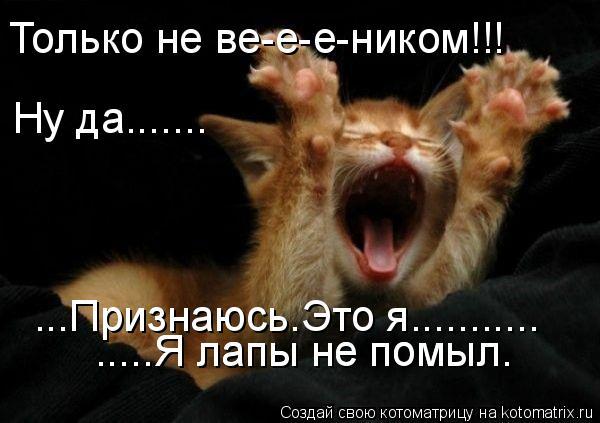 Котоматрица: Только не ве-е-е-ником!!! Ну да....... .....Я лапы не помыл. .....Я лапы не помыл. ...Признаюсь.Это я...........