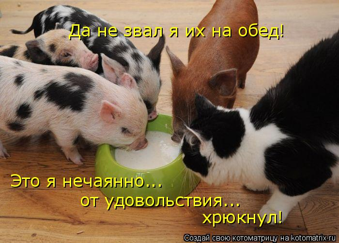 Котоматрица: Да не звал я их на обед! Это я нечаянно...  от удовольствия... хрюкнул!
