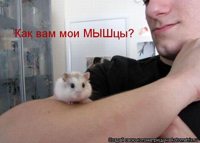 Котоматрица: Как вам мои МЫШцы?