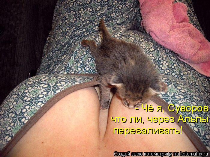 Котоматрица: - Чё я, Суворов что ли, через Альпы  переваливать!