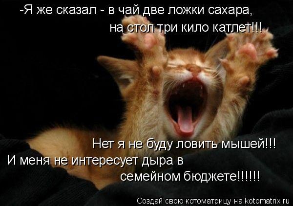 Котоматрица: -Я же сказал - в чай две ложки сахара,  на стол три кило катлет!!! И меня не интересует дыра в  семейном бюджете!!!!!! Нет я не буду ловить мышей!!!