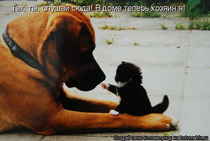 Котоматрица: Так, ты, слушай сюда! В доме теперь хозяин я!