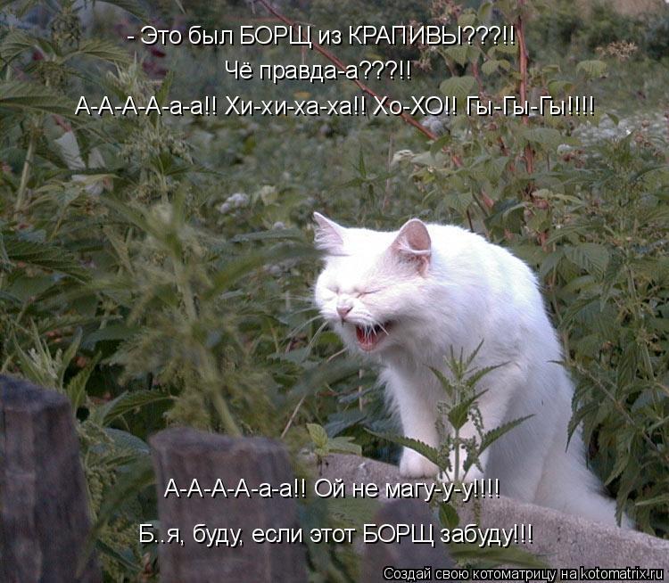 Котоматрица: Чё правда-а???!! А-А-А-А-а-а!! Хи-хи-ха-ха!! Хо-ХО!! Гы-Гы-Гы!!!! - Это был БОРЩ из КРАПИВЫ???!! Б..я, буду, если этот БОРЩ забуду!!! А-А-А-А-а-а!! Ой