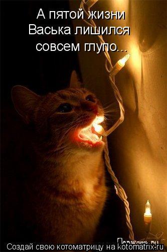 Котоматрица: А пятой жизни  Васька лишился совсем глупо...