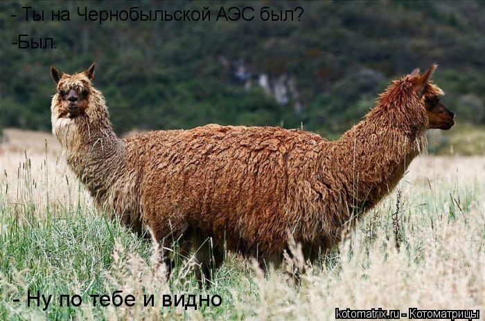 Котоматрица: - Ты на Чернобыльской АЭС был? -Был. - Ну по тебе и видно