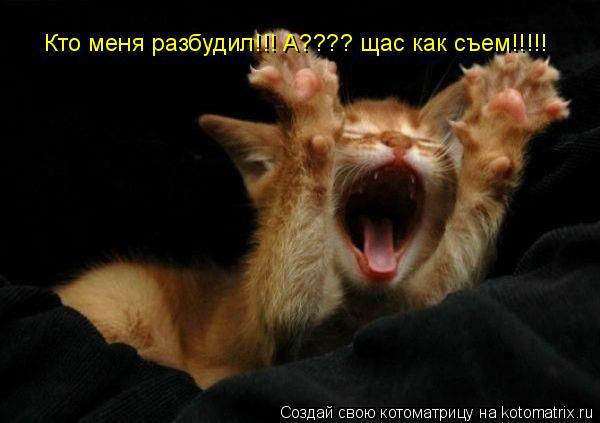 Котоматрица: Кто меня разбудил!!! А???? щас как съем!!!!!