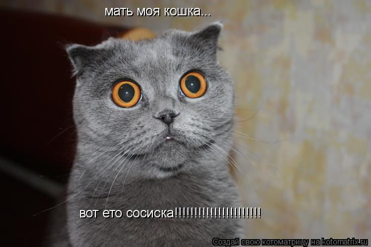 Котоматрица: мать моя кошка... вот ето сосиска!!!!!!!!!!!!!!!!!!!!!!