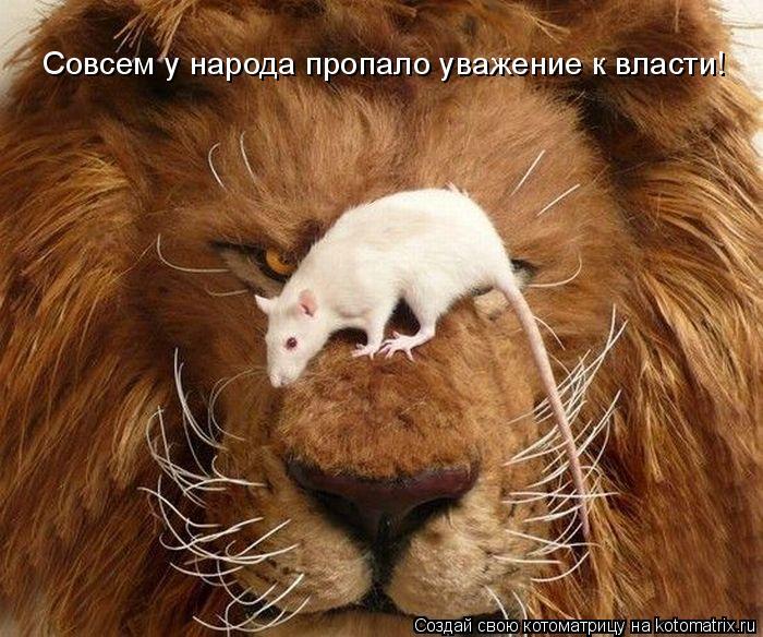 Котоматрица: Совсем у народа пропало уважение к власти!