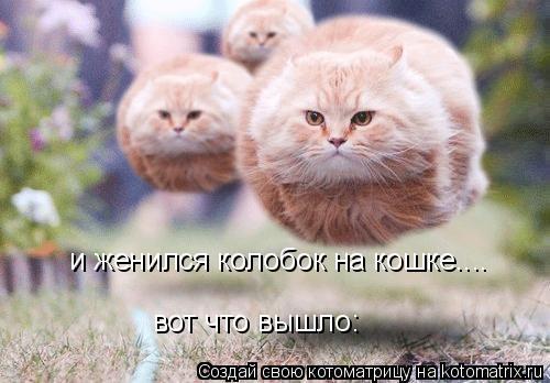 Котоматрица: и женился колобок на кошке.... вот что вышло:
