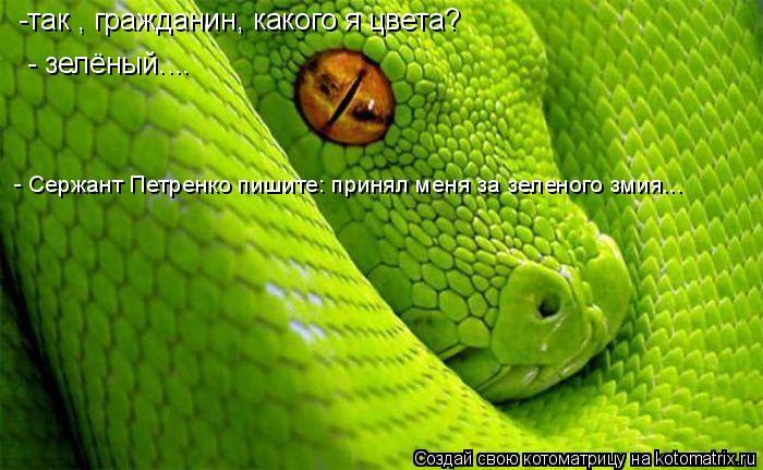 Котоматрица: -так , гражданин, какого я цвета? - зелёный.... - Сержант Петренко пишите: принял меня за зеленого змия...