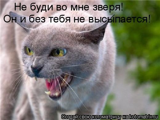 Котоматрица: Не буди во мне зверя! Он и без тебя не высыпается!